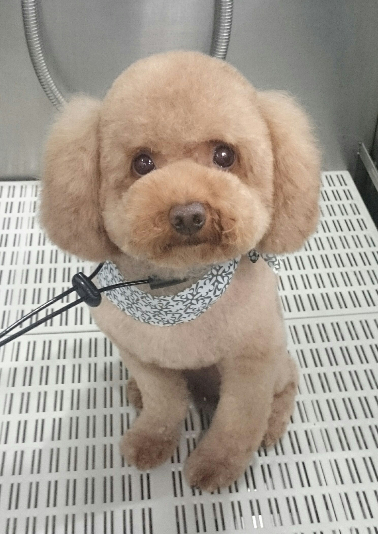 Teddy Bear with Puffy Round Ears